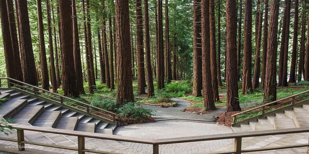 Free First Wednesday At Uc Berkeley Botanical Garden This June